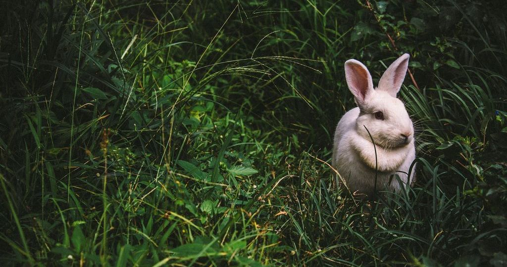5 faktov, ktoré by ste mali vedieť o testovaní kozmetiky na zvieratách